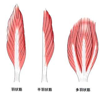 筋肉画像検索結果2