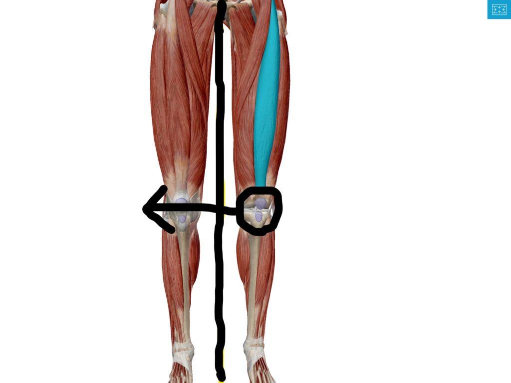 筋肉脚画像検索結果