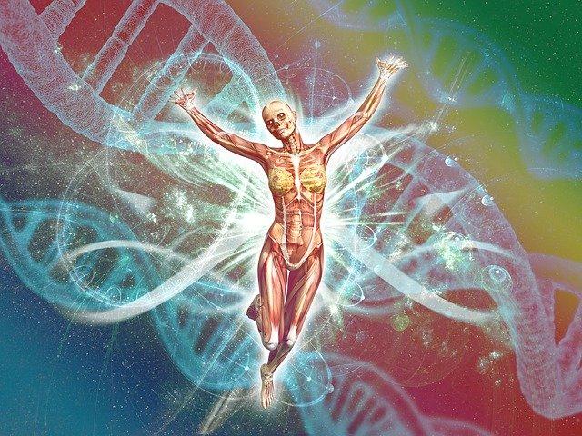 DNDの背景に人体解剖が両手を広げている画像