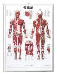 「解剖学」の画像検索結果